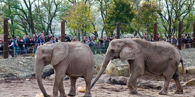 Thueringer Zoopark Erfurt, (c) Zoopark Erfurt, Herr Urban